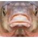 Profile photo of Fishface