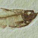 Profile picture of Tinpotdeveloper
